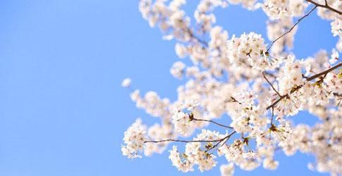 2016桜前線情報 2016桜開花予想!2016桜前線情報! いよいよお花見の季節! 春寒もよう
